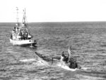 Oceangoing tug USS Abnaki takes the captured Type IXC submarine U-505 under tow, 7 Jun 1944. U-505 was captured three days earlier by the USS Guadalcanal hunter group. Photo 1 of 3.