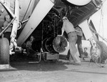 Ordinancemen working to load a Mark 10 aerial mine into the bomb bay of a TBF-1C of Torpedo Squadron VT-16 aboard USS Lexington (Essex-class), 29 Mar 1944 off the Palau Islands.