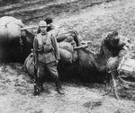 Japanese soldier with camel, northeastern China, 1937