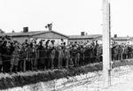 Prisoners at Dachau concentration camp cheer as the US 42nd Division moves in to liberate the camp, 3 May 1945