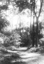 A trail off of the Bhamo-Namhkan Road, Burma, 29 or 30 Dec 1944; photograph taken by member of US 5332nd Brigade (Provisional)