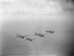 Martlet fighters of No. 888 Squadron FAA from HMS Formidable in flight, 1940s