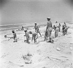 British troops digging defensive trenches near El Alamein, Egypt, 4 Jul 1942