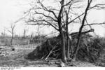 Camouflaged German Hornisse/Nashorn tank destroyer near Nettuno, Italy, Mar 1944, photo 1 of 2