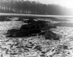 Remains of German soldiers who attempted to attack the US 101st Airborne Division command post near Bastogne, Belgium, 25 Dec 1944