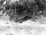 Soldier of US 101st Airborne Division dead in the woods near Bastogne, Belgium, 10 Jan 1945