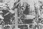 Wreck of G4M bomber whose crash killed Admiral Yamamoto, Bougainville, Solomon Islands, Apr 1943