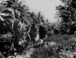 Tenaru River, Guadalcanal, Solomon Islands, 1942