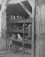 Inhumane conditions at Buchenwald, 16 Apr 1945, photo 1 of 2