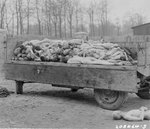 Bodies of victims piled in a trailer at Buchenwald concentration camp at Weimar, Germany, 14 Apr 1945