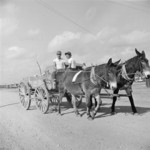 Mule wagon at Jerome War Relocation Center, Arkansas, United States, 18 Nov 1942, photo 1 of 6