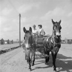 Mule wagon at Jerome War Relocation Center, Arkansas, United States, 18 Nov 1942, photo 3 of 6