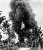 A column of smoke from burning rubber at a Malayan rubber plantation, Dec 1941