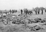Remains of killed American soldiers gathered in a field, Normandy, France, early Jun 1944