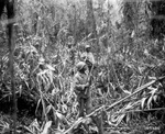 African-American soldiers of the US Army 93rd Infantry Division traveling along the Numa-Numa Trail, Bougainville, Solomon Islands, 1 May 1944
