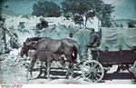 German soldier on a horse-drawn cart in Crimea, Russia (now Ukraine), circa 1942