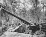 155mm Gun M1 of USMC 4th Defense Battalion near Barakoma, Vella Lavella, Solomon Islands, date unknown