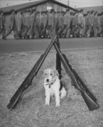 US Marine mascot dog Mike, Marine Corps Recruit Depot Parris Island, South Carolina, United States, 1940s